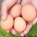 【山ん中たまご園】平飼い養鶏家が地産地消で循環型社会を実現する暮らし