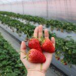 【加賀フルーツランドの思い】地元で育て、加工し、提供するまで【年間を通じて果物を】