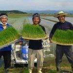 【かが有機農法研究会】鳥にも人にも優しいティール米にかける想い